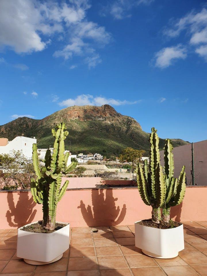 Charming Vibrant House w/ Backyard + Cactus Garden + Yoga